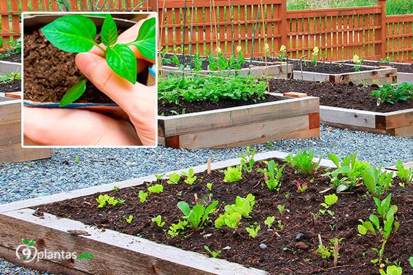 Cambiar pH del suelo, ácido, alcalino: Plantas según tipo de suelo