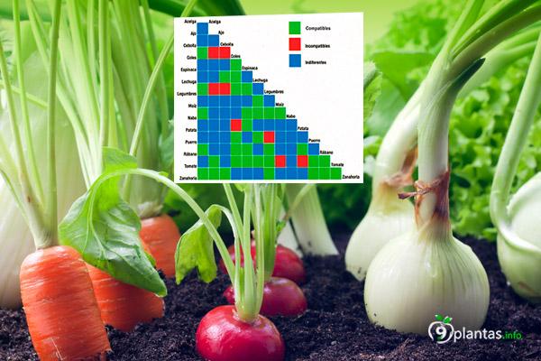 Compatibilidad de plantas en el huerto