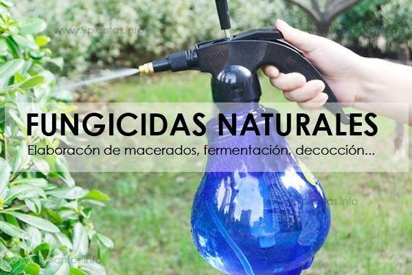 Como elaborar fungicidas naturales a base de plantas