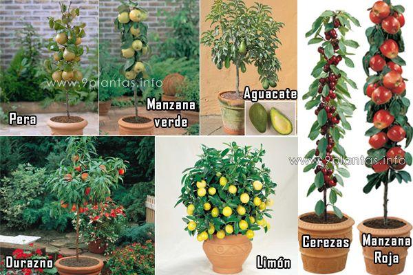 Árboles frutales enanos que puedes cultivar en tu jardín o huerto