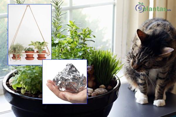 ¿Cómo evitar que los gatos orinen en las macetas?