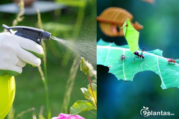 9 mejores INSECTICIDAS orgánicos para hormigas, pulgones, hongos, larvas