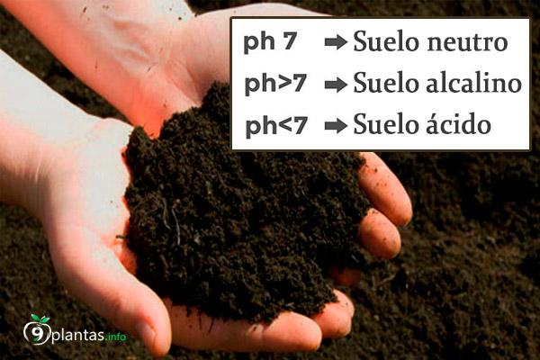 pH del suelo, como medir la acidez para una buena siembra