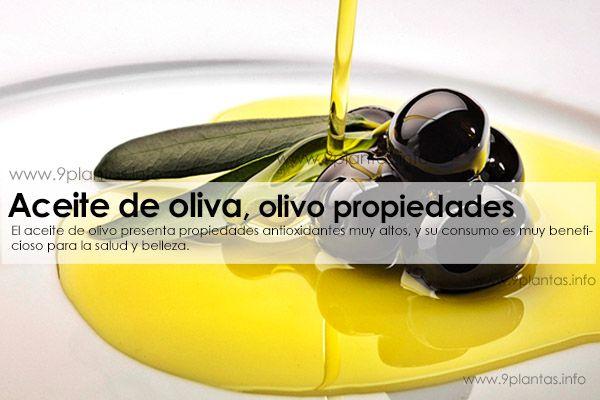Aceite de oliva, olivo propiedades medicinales