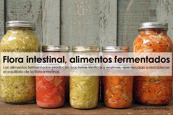 Flora intestinal, alimentos fermentados