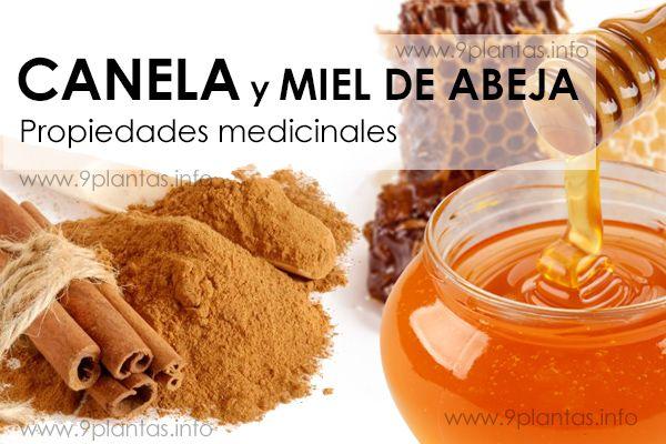 Canela con miel de abeja propiedades medicinales