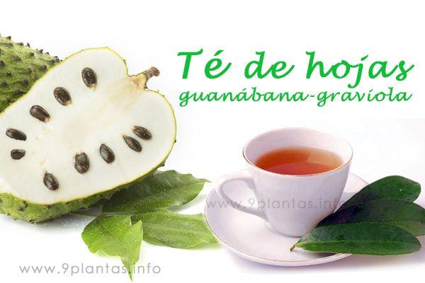 Té de hojas guanábana, graviola propiedades medicinales