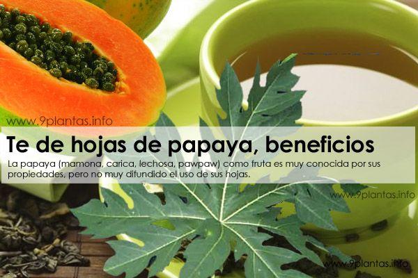 Te de hojas de papaya (mamona, carica, lechosa, pawpaw), principales beneficios