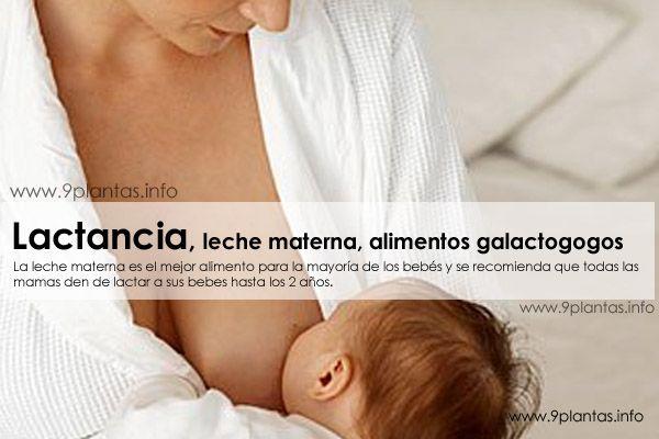 Lactancia, leche materna, alimentos galactogogos