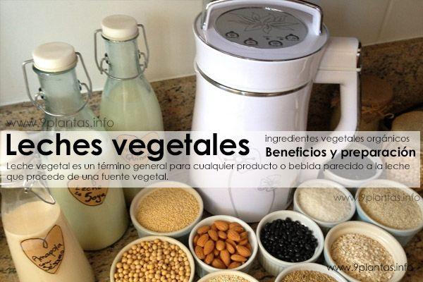 Leche vegetal casera beneficios (soya, avena, almendras, quinua)