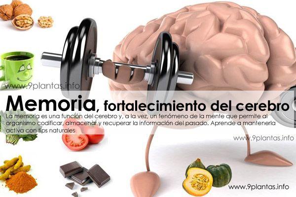 Memoria, fortalecimiento del cerebro