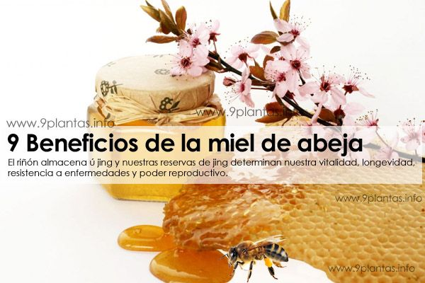 9 Beneficios de la miel de abeja natural