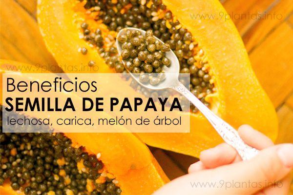 Semilla de papaya (lechosa, carica) grandes beneficios