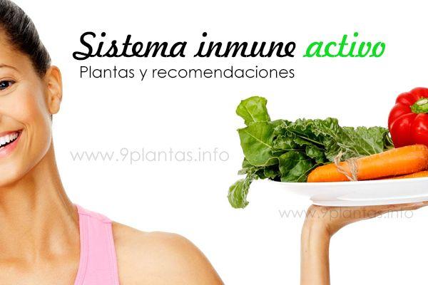 Plantas y recomendaciones que ayudan al sistema inmunológico