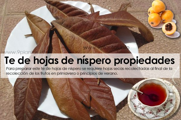 Té de hojas de níspero propiedades