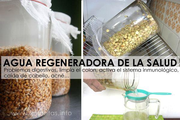 Agua de germinados, agua regeneradora de la salud, rejuvelac