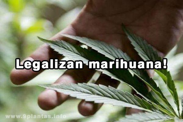 Marihuana: 300 médicos ya pueden recetar marihuana a pacientes – Florida (EE.UU)