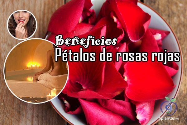 Pétalos de rosas rojas beneficios para la salud y aliado de tu belleza