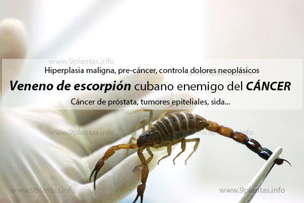 Veneno de escorpión cubano enemigo del cáncer