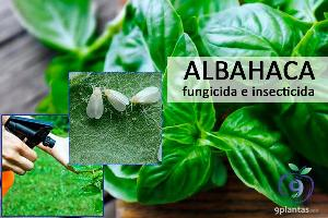 Albahaca para combatir plagas de pulgones y moscas